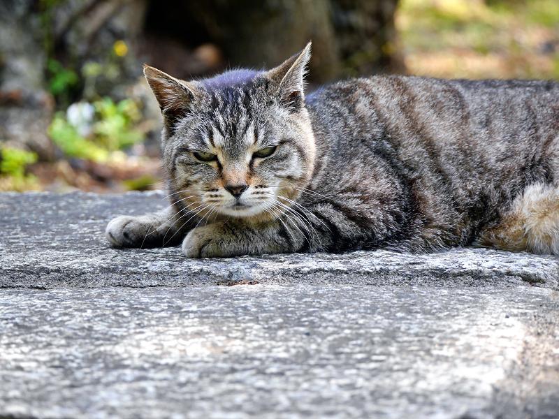 無表情なキジトラ猫3