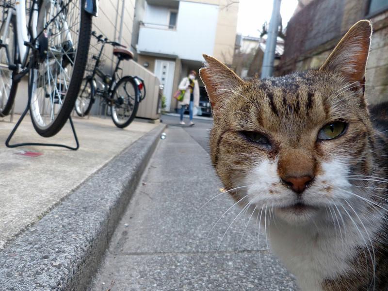 路地のキジ白猫