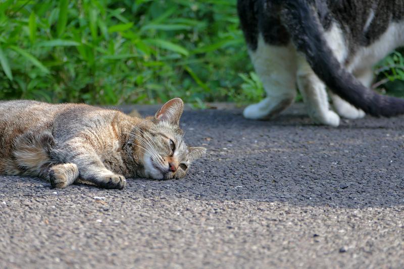 再び眠るキジトラ猫1