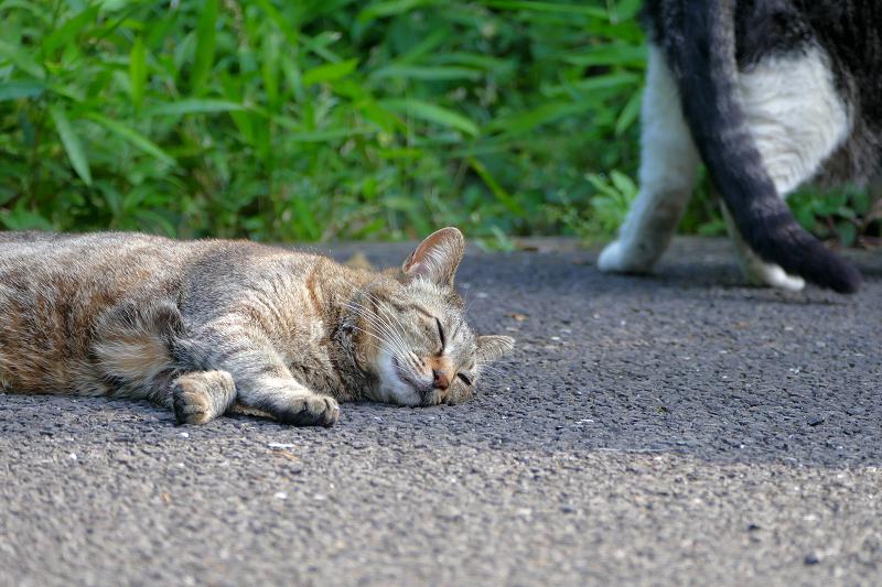 再び眠るキジトラ猫2