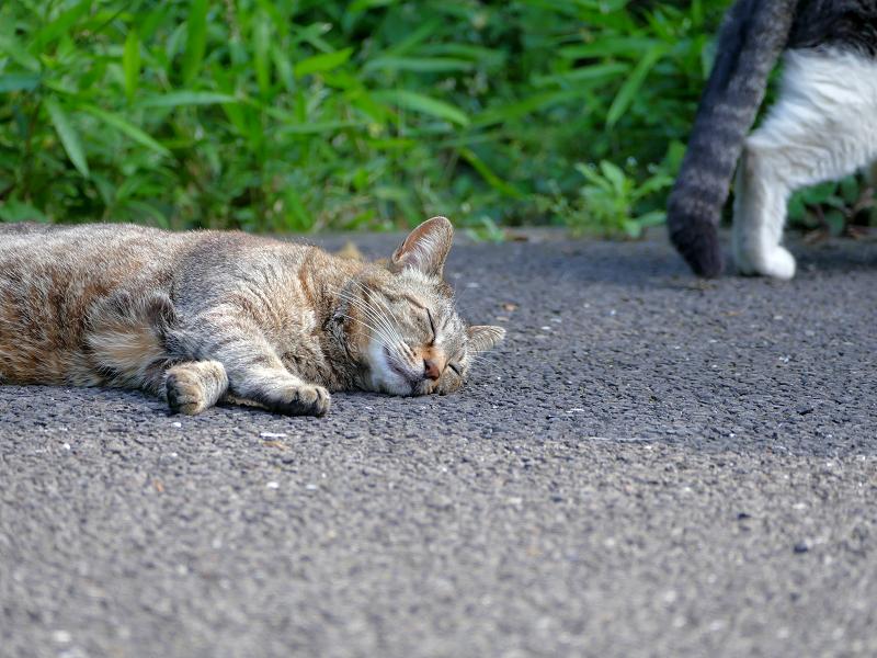 再び眠るキジトラ猫3