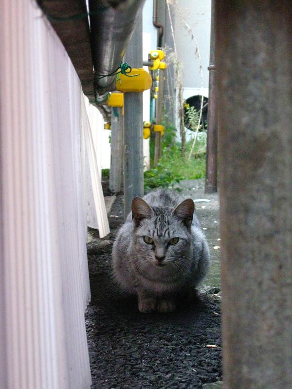 隙間のサバトラ猫1