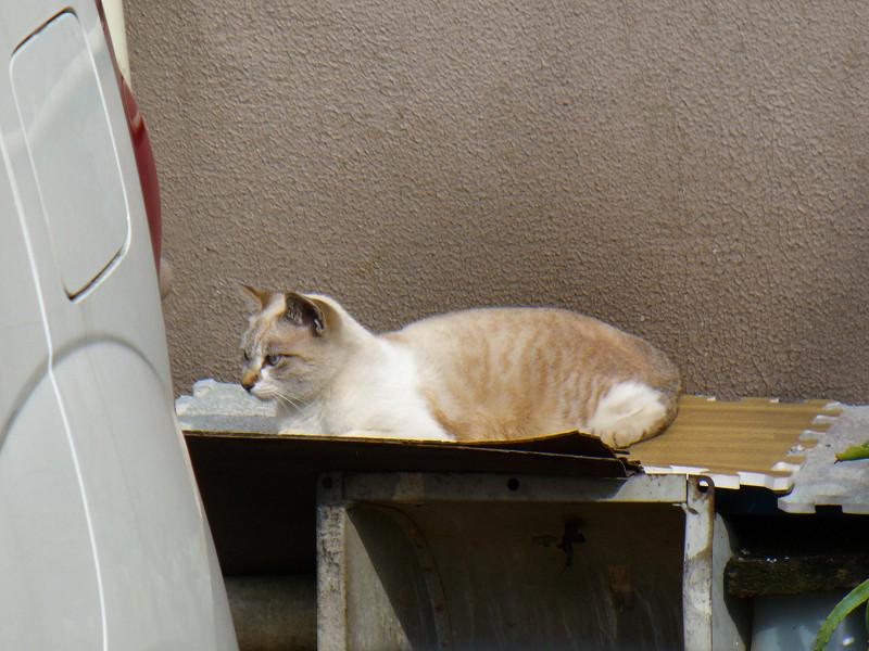 専用マットの猫1