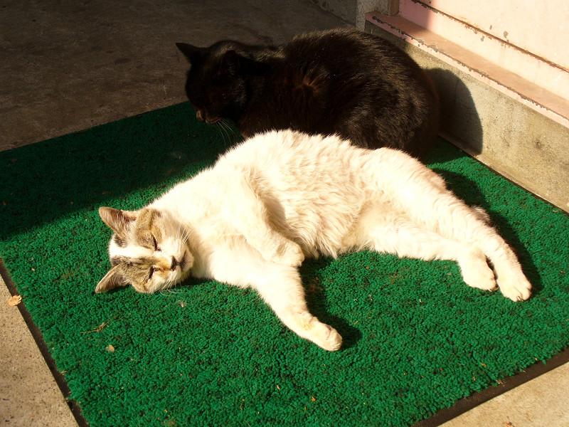 白系猫と黒猫1