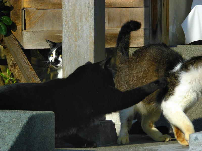 行動する黒猫2