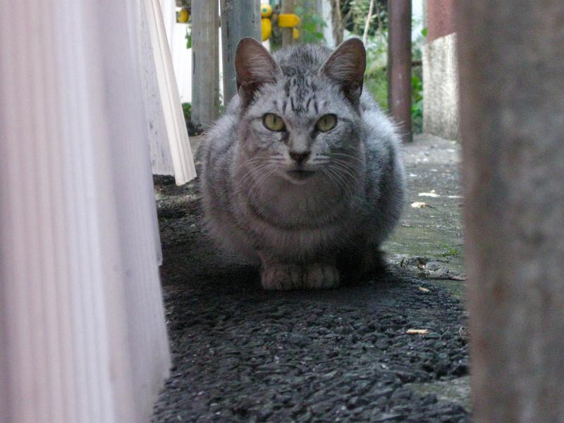 隙間のサバトラ猫2