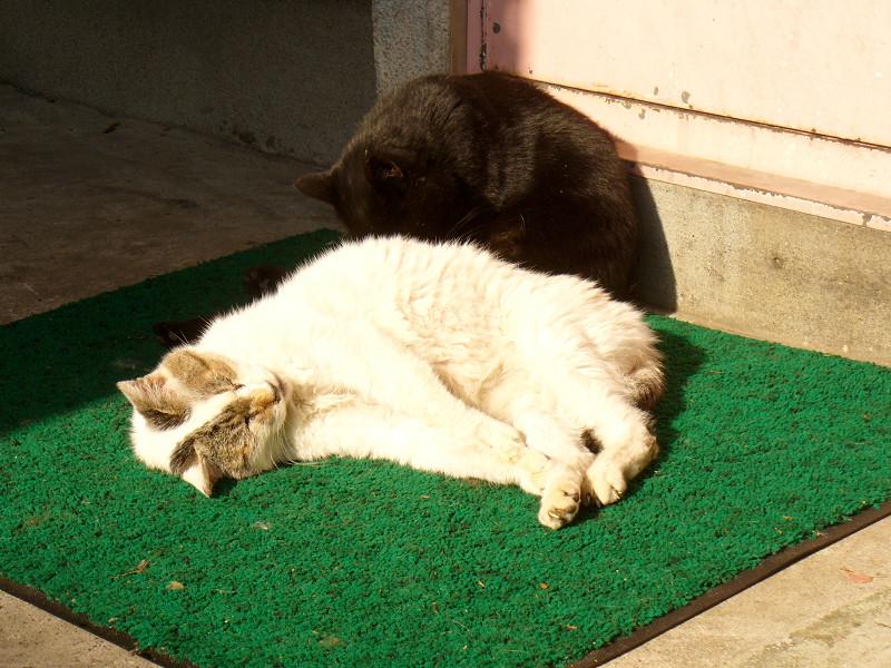 白系猫と黒猫2