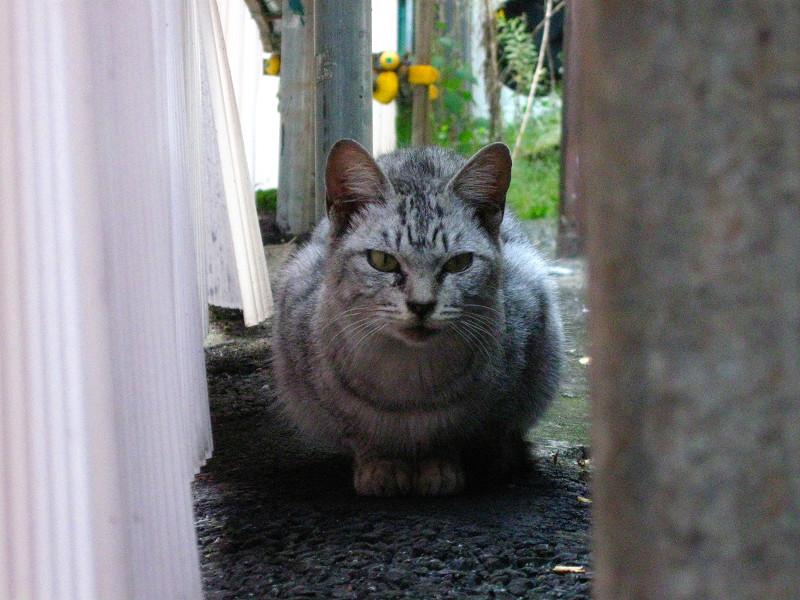 隙間のサバトラ猫3