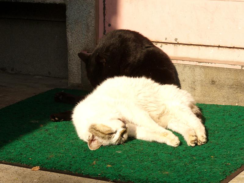 白系猫と黒猫