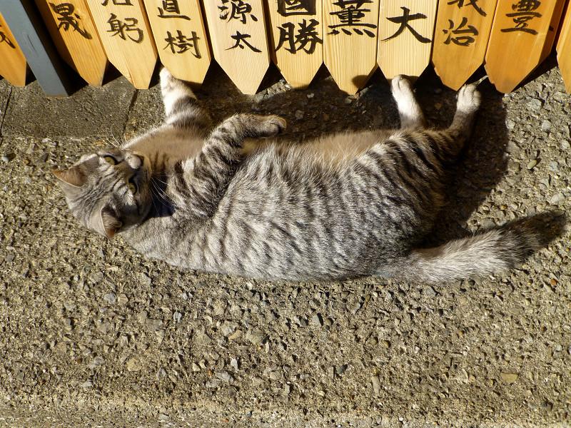 卒塔婆とサバトラ猫2