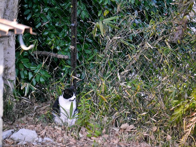 藪と黒白猫1