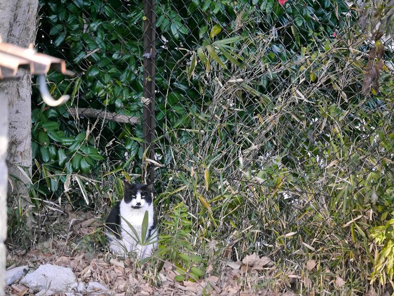 藪と黒白猫2
