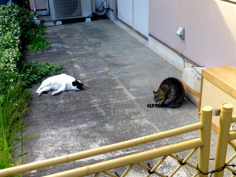 柵の向こうの猫たち1