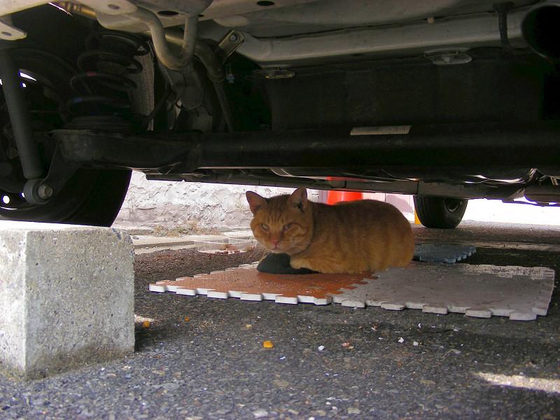 車の下でマットに座ってる茶トラ猫1