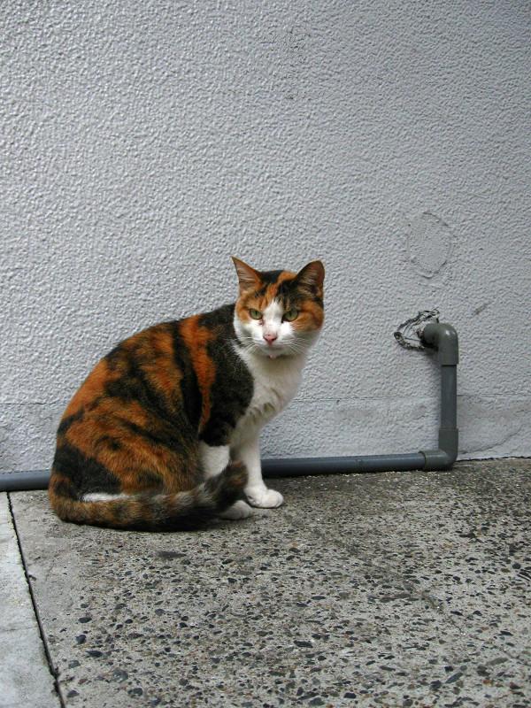 壁と三毛猫1