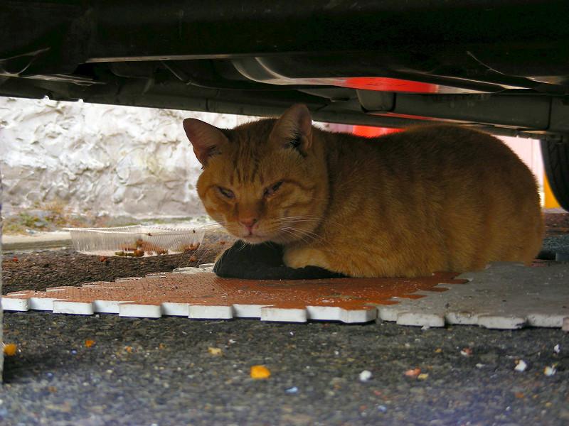 車の下でマットに座ってる茶トラ猫2
