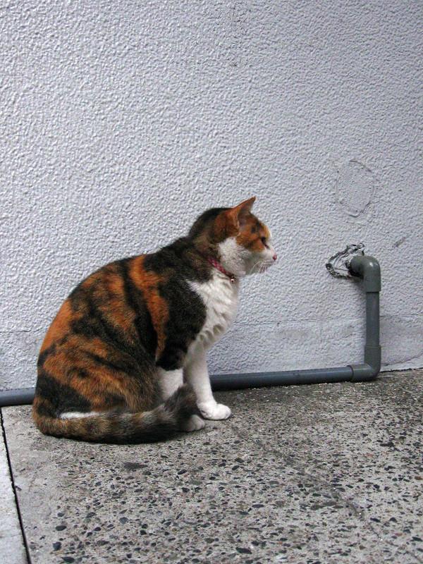 壁と三毛猫2