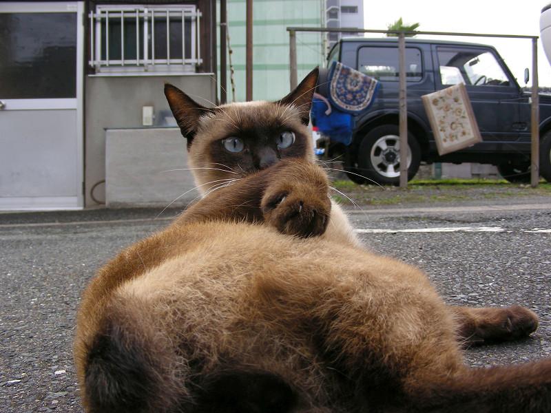 触らせてくれた洋風猫3