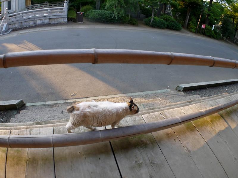 お堂を回った白三毛猫1