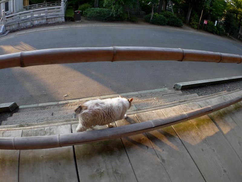 お堂を回った白三毛猫2