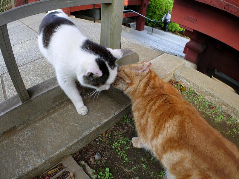 頭をくっつける茶猫と白キジ猫3
