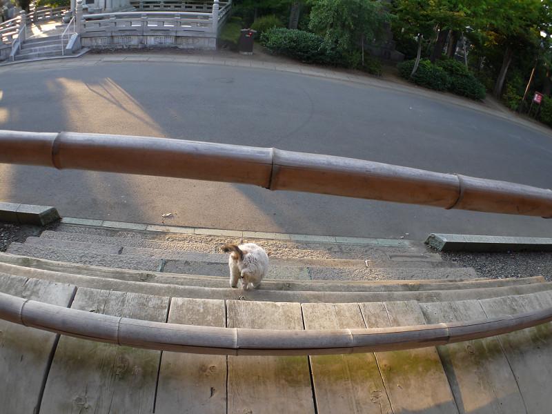 お堂を回った白三毛猫