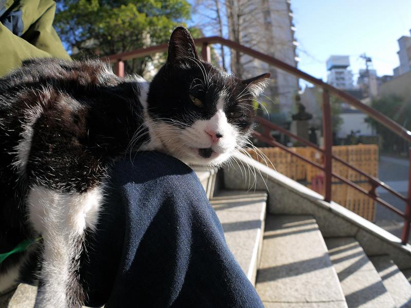 膝の上で寛いでる黒白猫2