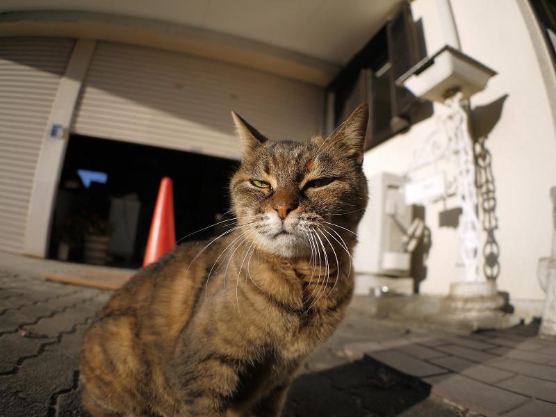 視線を動かすサビ柄猫1