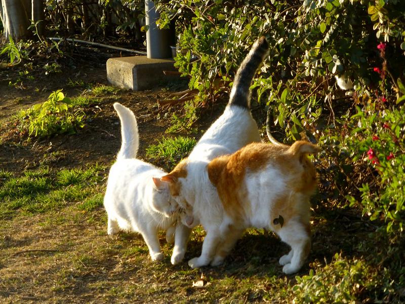 仲良しな猫たち2