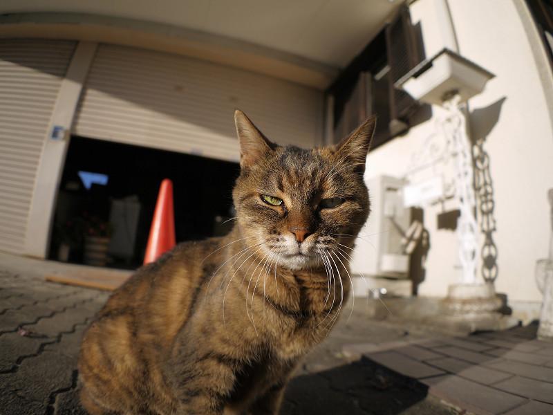 視線を動かすサビ柄猫2