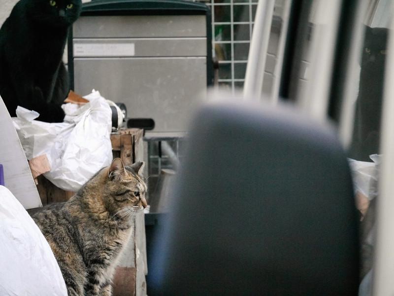 車の奥の方にいた猫たち2