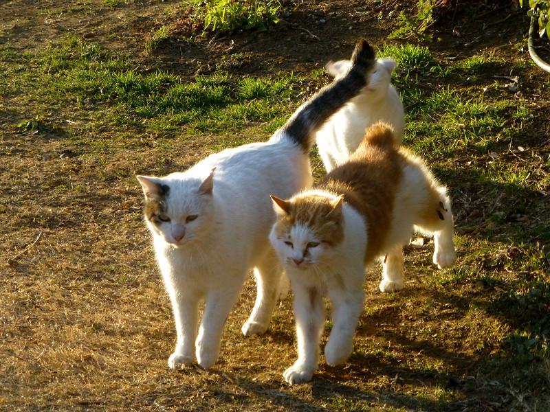 仲良しな猫たち3