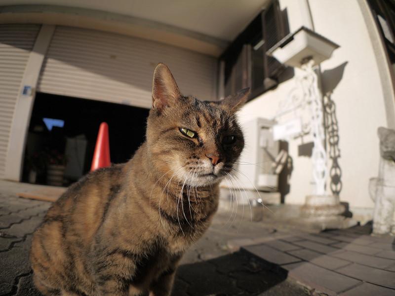 視線を動かすサビ柄猫3