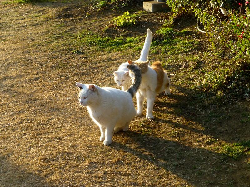 仲良しな猫たち4