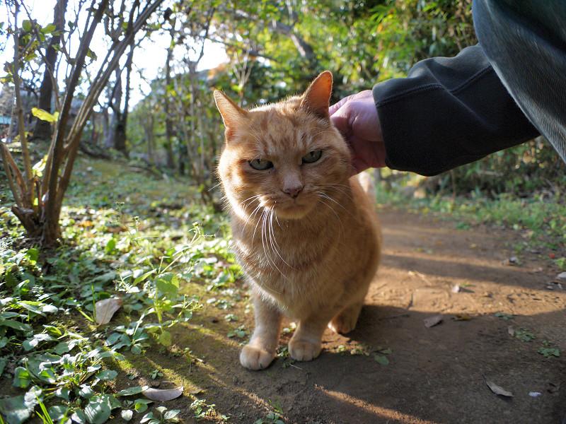 雑木林の茶トラ猫3