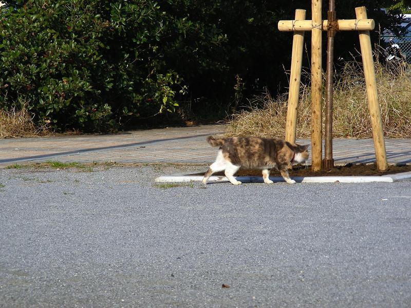 事後を確認した三毛猫1