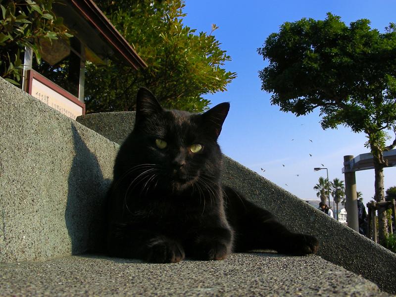 階段の黒猫1
