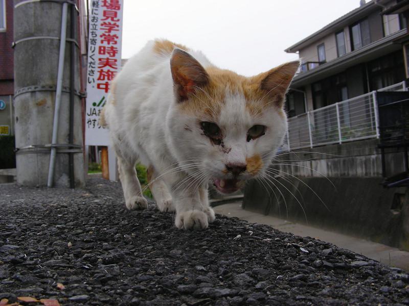 近づく猫のローアングル1