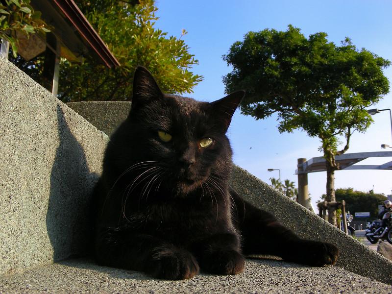 階段の黒猫2