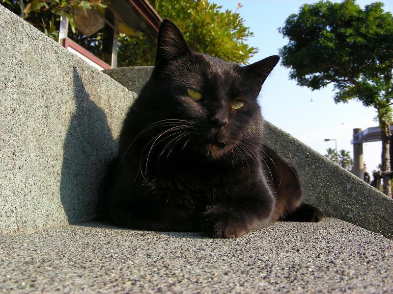 階段の黒猫3