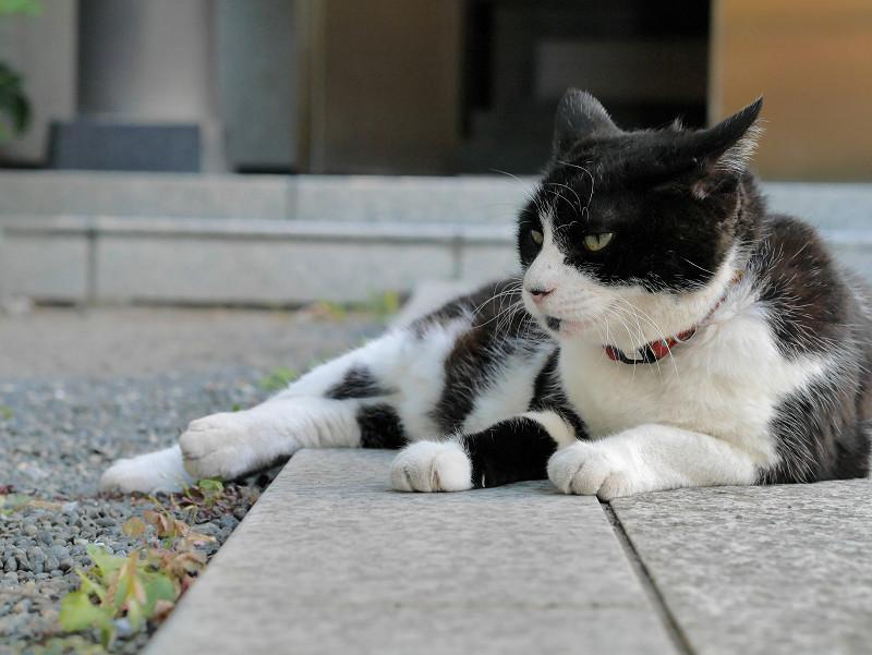 参道に腹ばってる黒白猫