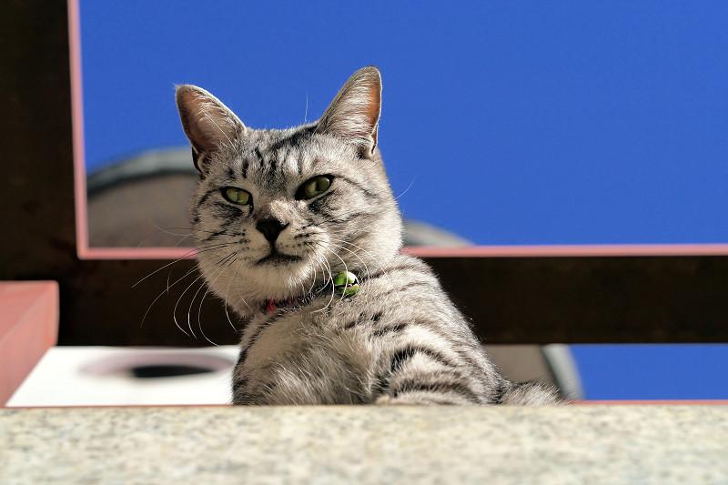 人を見下ろすサバトラ猫2