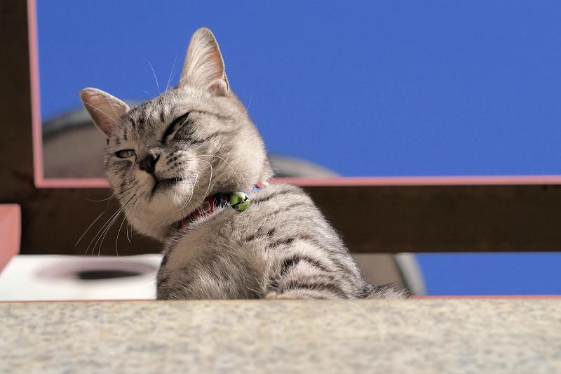 人を見下ろすサバトラ猫3
