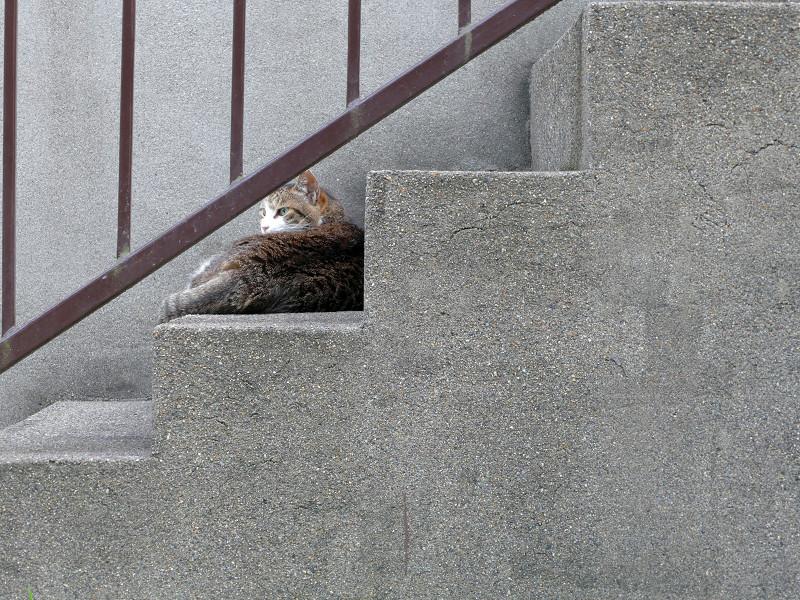 階段のキジ白猫3