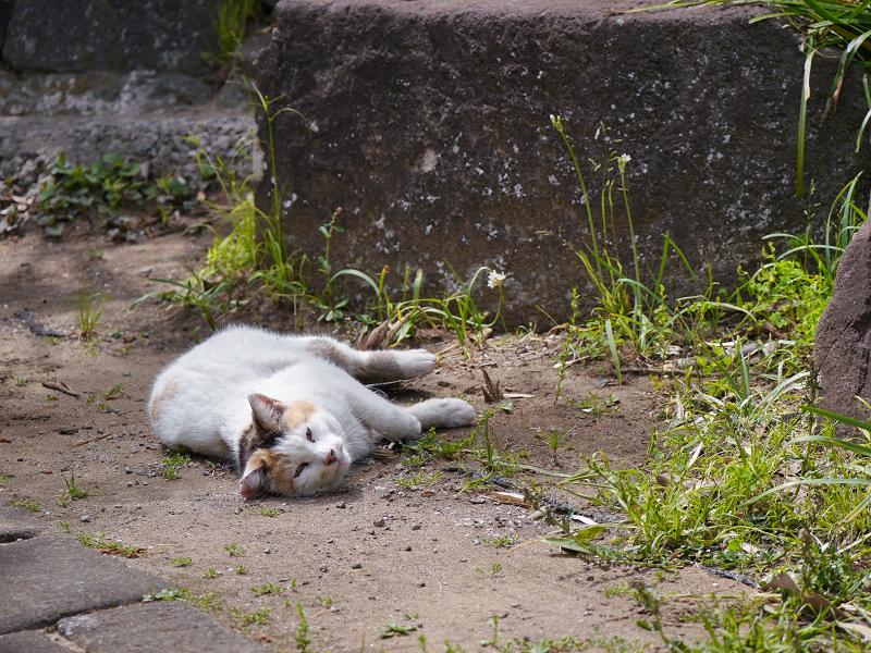 転がって休む白三毛猫3