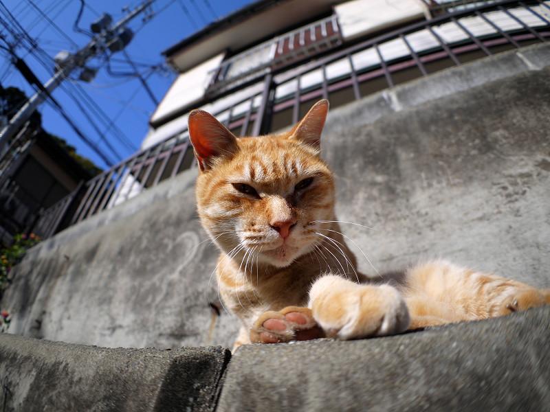 目が覚めた茶白猫1