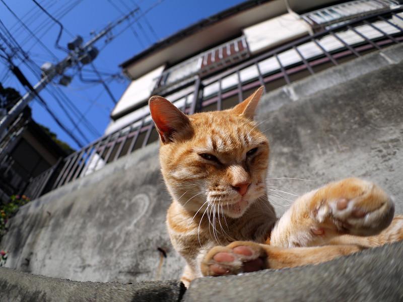 目が覚めた茶白猫2