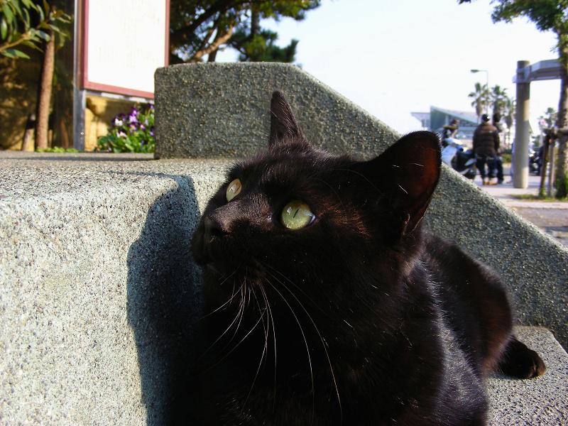 見上げる黒猫1