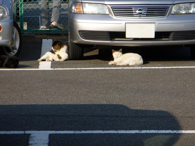 車の回りの猫たち