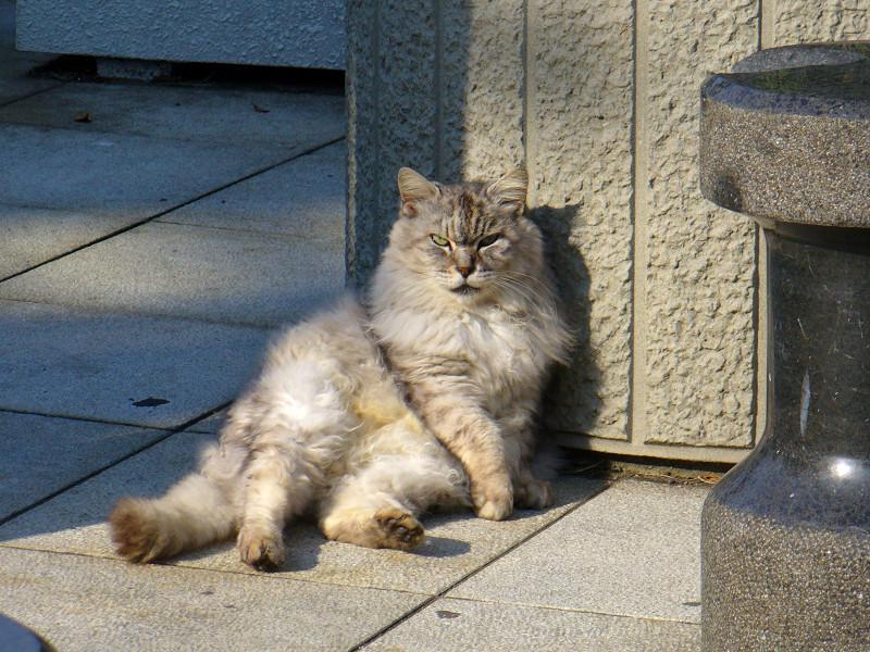 お腹をみせて座ってる猫2